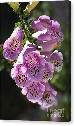 Canvas Print - Foxglove Flowering Delight by Joy Watson