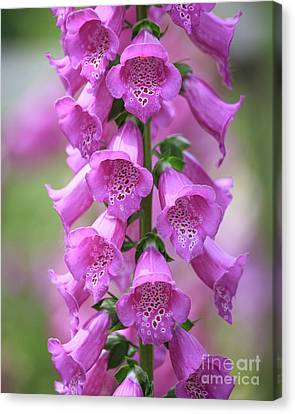 Canvas Print featuring the photograph Foxglove Flowers by Edward Fielding