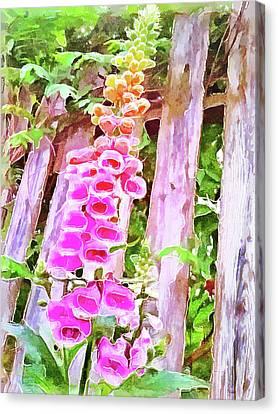 Foxglove In The Shade Canvas Print