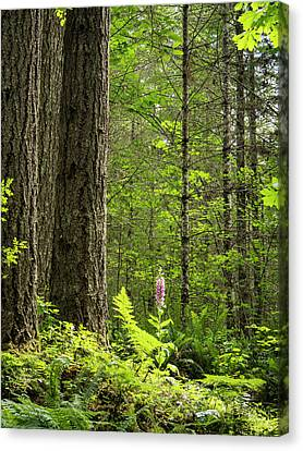 Canvas Print featuring the photograph Foxglove In The Woods by Jean Noren