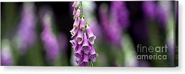 Foxglove Panoramic Canvas Print by Tim Gainey