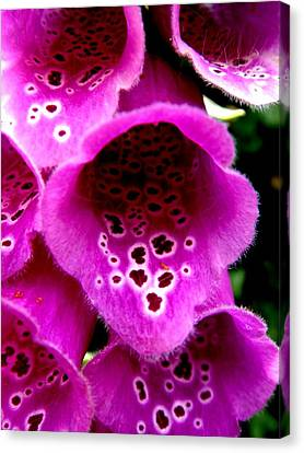 Flowers Canvas Print featuring the photograph Foxglove by Roberto Alamino