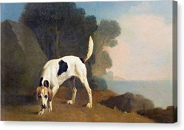 Foxhound On The Scent Canvas Print by George Stubbs