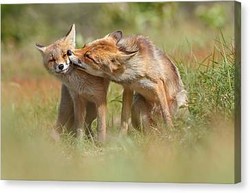 Kit Fox Canvas Print - Foxy Love Series - But Mo-om II by Roeselien Raimond