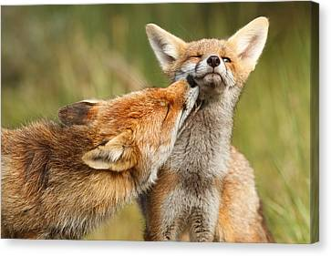 Kit Fox Canvas Print - Foxy Love Series - But Mo-om by Roeselien Raimond