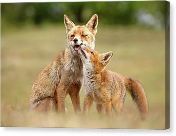 Bonding Canvas Print - Foxy Love Series - Love You, Mom by Roeselien Raimond
