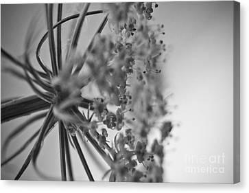 Fractal Flower Photoset 03 Canvas Print by Ryan Kelly