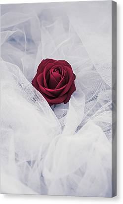Fragile Canvas Print by Art of Invi