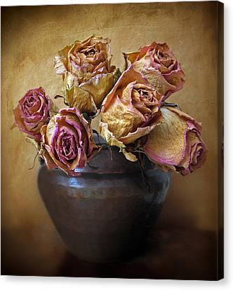 Fragile Rose Canvas Print by Jessica Jenney