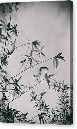 Canvas Print featuring the photograph Fragility And Strength by Linda Lees