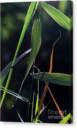 Canvas Print featuring the photograph Fragment by Linda Lees