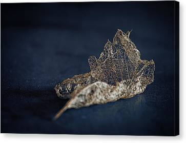 Canvas Print featuring the photograph Fragment by Tim Nichols