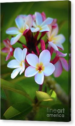 Canvas Print featuring the photograph Fragrant Sunset by Kelly Wade