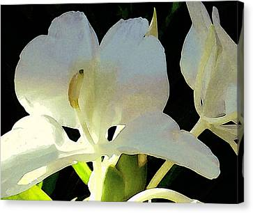 Fragrant White Ginger Canvas Print by James Temple