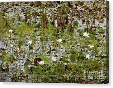 Canvas Print featuring the photograph Fragrant White by Susan Cole Kelly