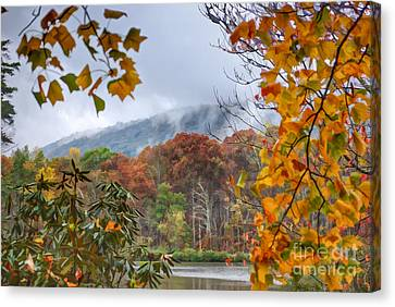 Framed By Fall Canvas Print