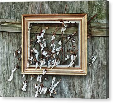 Cotton Farm Canvas Print - Framed Cotton by Michael Thomas