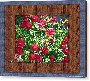 Framed Petunias Canvas Print by Morning Dew