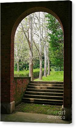 Framed Sycamores Canvas Print by Susan Isakson