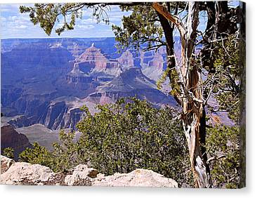 Framed View - Grand Canyon Canvas Print by Larry Ricker
