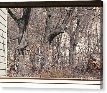 Framing Tangled Dunescape Canvas Print by Ann Horn