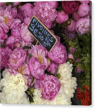 France, Paris Peonies Flowers Canvas Print by Keenpress