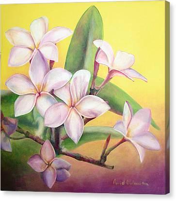 Frangipanier Canvas Print by Muriel Dolemieux