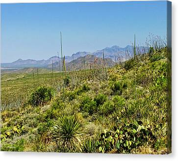Franklin Mountains State Park Facing North Canvas Print by Allen Sheffield