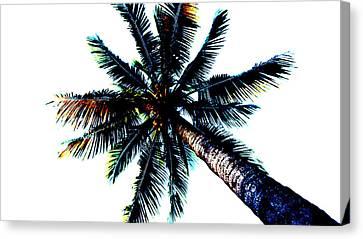 Frazzled Palm Tree Canvas Print