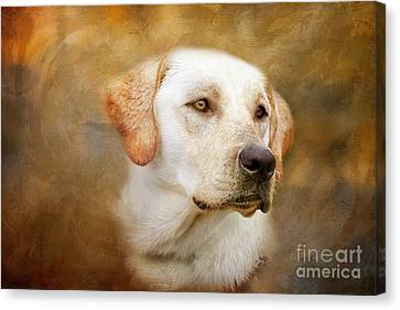 Fred Canvas Print