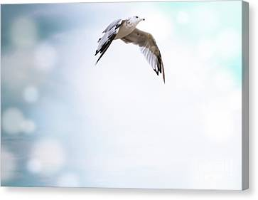 Free As A Bird Canvas Print by Colleen Kammerer