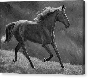 Free - Black And White Canvas Print by Lucie Bilodeau