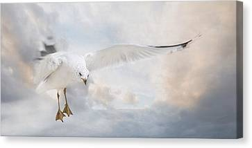 Canvas Print featuring the photograph Free To Fly by Robin-Lee Vieira