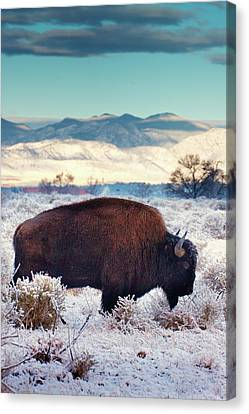 Free To Roam Canvas Print