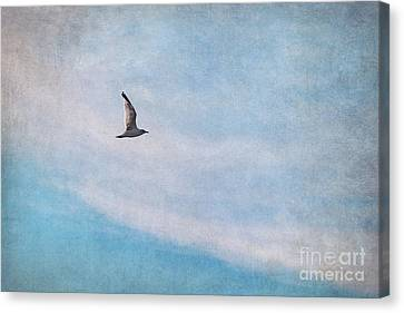 Sea Birds Canvas Print - Freedom by Angela Doelling AD DESIGN Photo and PhotoArt