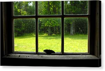 Freedom Awaits Me Canvas Print by David Lee Thompson