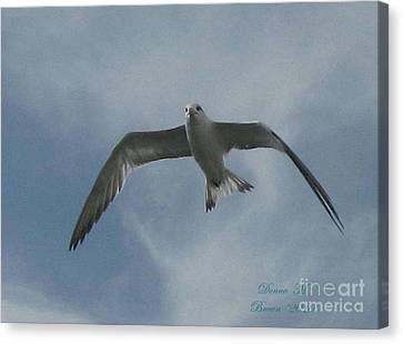 Canvas Print featuring the photograph Freedom by Donna Brown