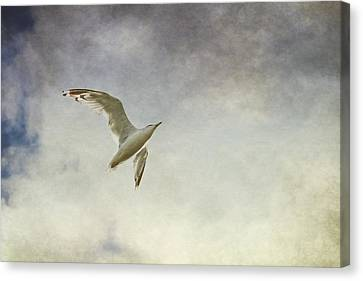 Freedom Canvas Print by Maggie Terlecki