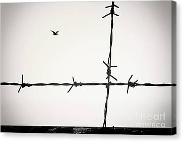 Freedom To Be Yourself... Canvas Print