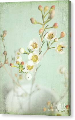 Freesia Blossom Canvas Print