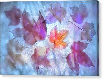 Canvas Print featuring the photograph Freeze by Richard Piper