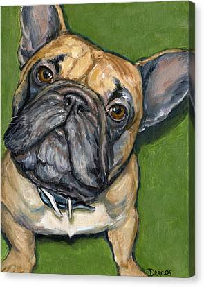 French Bulldog Looking Up On Green Canvas Print by Dottie Dracos