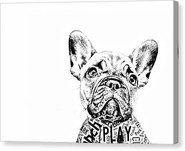 Dog Canvas Print - French Bulldog Portrait by Marvin Blaine