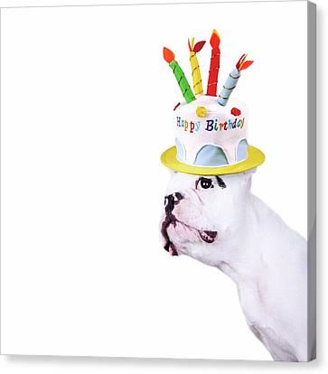 French Bulldog With Birthday Cake Canvas Print by Maika 777