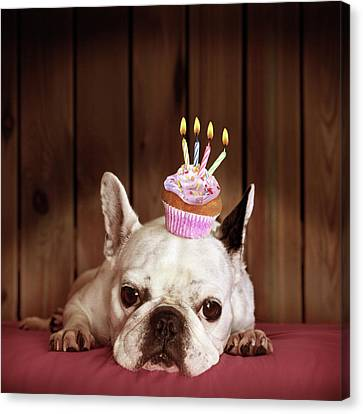 Bulldogs Canvas Print - French Bulldog With Birthday Cupcake by Retales Botijero