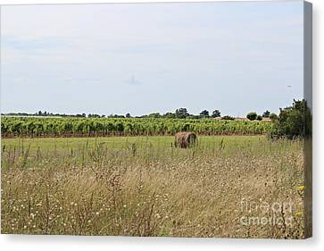 Canvas Print featuring the photograph French Countryside by Cendrine Marrouat