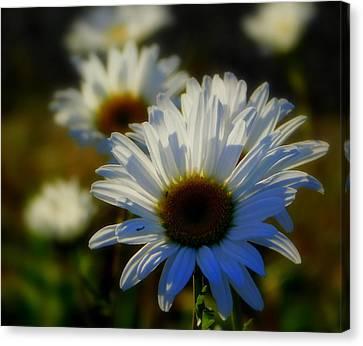 Fresh As A Daisy Canvas Print by Karen Cook