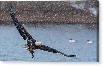 Canvas Print featuring the photograph Fresh Catch by Kelly Marquardt