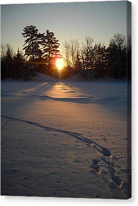 Fresh Deer Tracks At Sunrise Canvas Print by Kent Lorentzen
