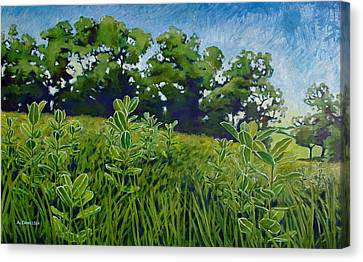 Fresh Field Canvas Print by Andrew Danielsen